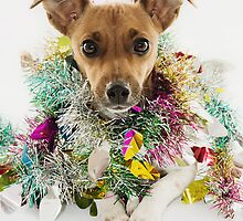 Christmas Tinsel Dog by CptnLucky