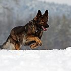 German Shepherd Working Line by LexiTheMonster