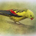 Regent parrot by Jan Pudney