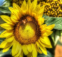 Sunflower and Bee by Thomas Stayner