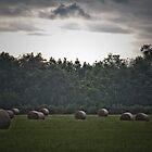 Rolling In The Hay by Ken Baugh