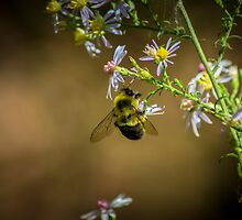 Busy Bumble Bee Indeed by Rob Heber