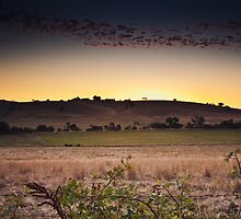 Farmland, Lysterfield by Michael Tuni