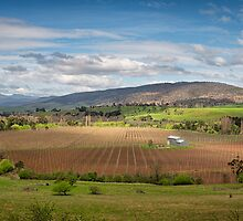 Hop Farm, Glenora, Tasmania by Chris Cobern