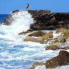 Seagull Over Akko Israel by BrianJoseph