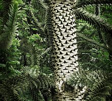 Monkey Puzzle Tree by Ellen Cotton