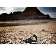 Scorpions everywhere. Photographic Print
