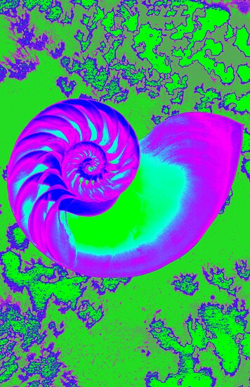 Color growth, nautilus shell by sebmcnulty