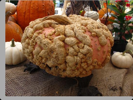 Peanut Pumpkin by MarianBendeth