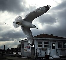 Seagull Over Pier and Bar by DangRabbit
