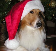 Merry Christmas Sheltie by jkartlife