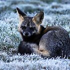 Fox Waiting In First Frost by TerrillWelch