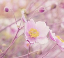 Anemone V by afeimages