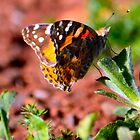 Orange butterfly by Bami