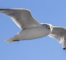 Being Watched by a Seagull by Mikell Herrick