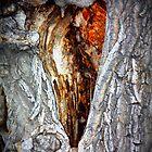 Hearts in nature by Susannah Kotyk