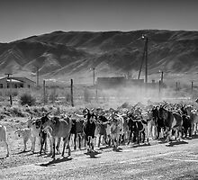 Walking the Goats - in monochrome by photograham
