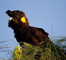 Posing Parrot by byronbackyard