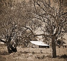 on the road to Coonamble by SharronS