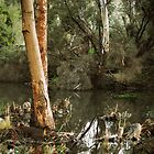 Eucalyptus at Kennington Resevoir By Lorraine McCarthy by Lozzar Landscape