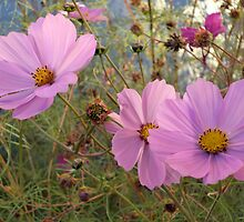 Cosmos - End  of Season (3) by goddarb