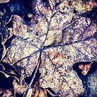Leaf litter by Andy Parker
