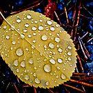 Autumnleaf by marina63