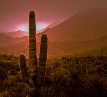 Cactus with Setting Sun by Photopa