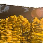 Aspens in Motion 1 by Audrey Farber