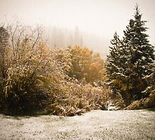 Autumn Snow by Audrey Farber