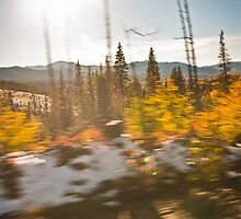 Aspens in Motion 2 by Audrey Farber