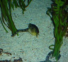 Underwater Life by merrychris