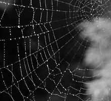 Spider Web Dew by Audrey Farber