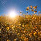 Sun Worshipers by Bob Larson