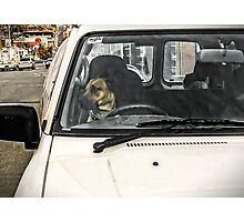 Doggone It! Always check the rear vision mirror before changing lanes Photographic Print