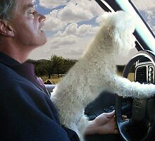 """?•°*""""˜SIT BACK AND RELAX - LET ME SHOW U HOW TO DRIVE CANINE STYLE--INCLUDED IS MY WRITTEN POEM""""*°•? by ✿✿ Bonita ✿✿ ђєℓℓσ"""