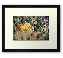 Frosted delight Framed Print