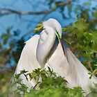 Great Egret Maternal Moment by Delores Knowles