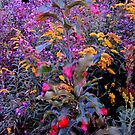 Goldenrod, New England Asters, a Baby Oak Tree and the Barn at Dusk the first Evening of October by TrendleEllwood