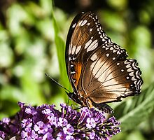 Beautiful Butterfly by caths13