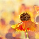 Sunlit Helenium Flowers with Texture Effect by Natalie Kinnear