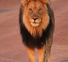 King of the Jungle by Michelle Sole