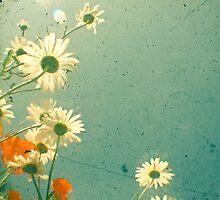 Daisy by Cassia