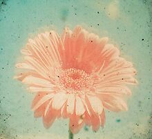 Gerbera by Cassia