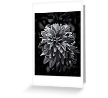 Backyard Flowers In Black And White 15 Greeting Card