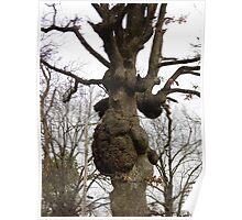 Lumpy Tree Poster