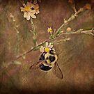Bee by Ginger  Barritt