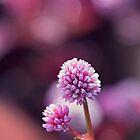 Pinkness II by Josie Eldred