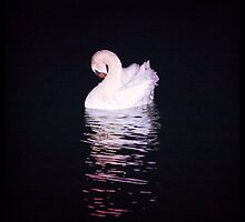 Swan by Dmitry Klevansky