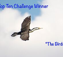 The Birds Top Ten Challenge Winner Banner by Steve Randall